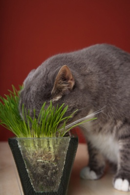 62 Best Images About Poison Plants On Pinterest