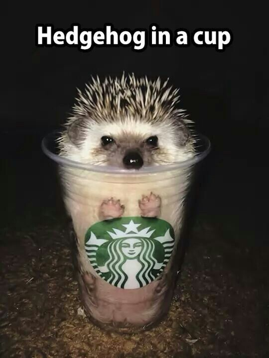 sTARBUCK'S CUP WITH A HEDGEHOG