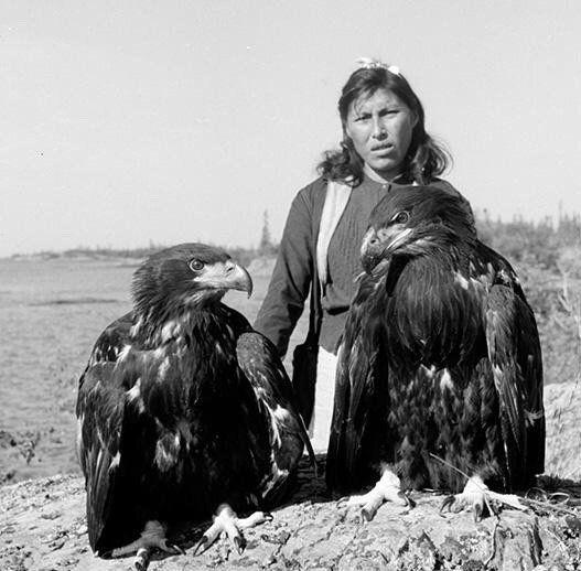 Mary Baillargeon & eagles' ~ Eaglets raised by Alexie Crapeau ~ (Dene) ~ NWT 1956