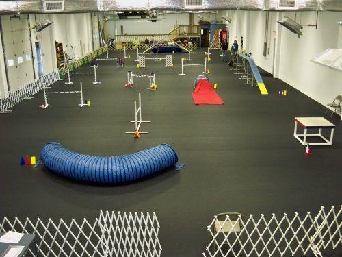 Very nice indoor setup.  All-weather agility fun.