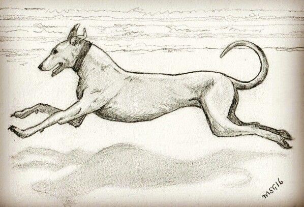 Greyhound I n a beach, pencil sketch by me. #graphite