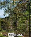 Deer-resistant plants from Deer-resistant Landscape Nursery