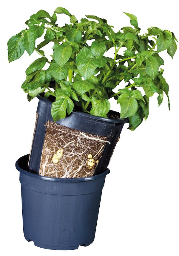 Great way to pick over the whole season. Use two pots and make you own cut out.