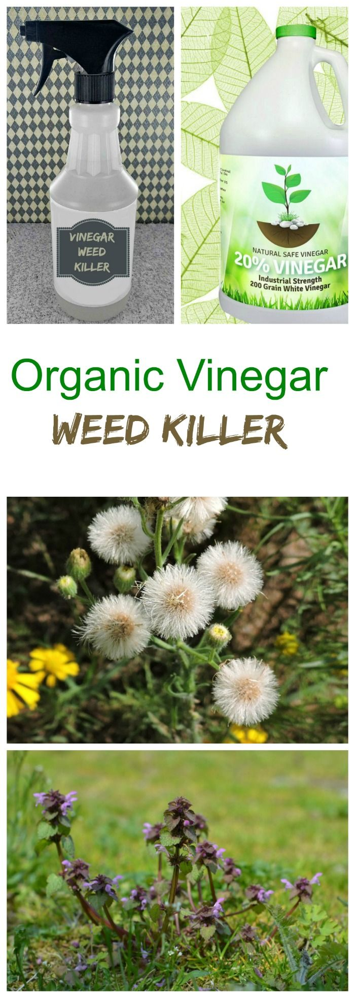Weeds in flower beds organic killer - This Vinegar Weed Killer Uses Organic Or Horticultural Vinegar To Kill Weeds Without The Use Of
