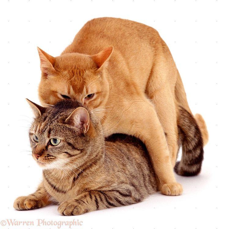divinity original sin 2 cat