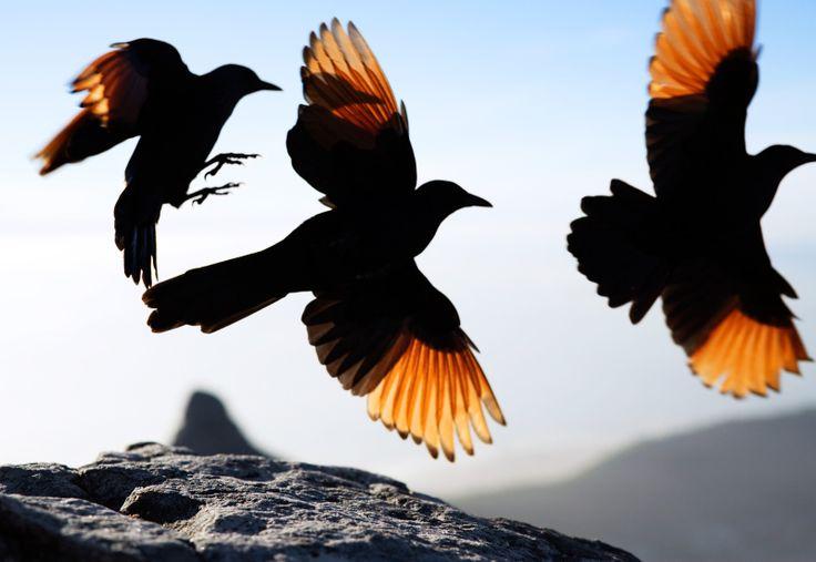 On Table Mountain - Corey Arnold