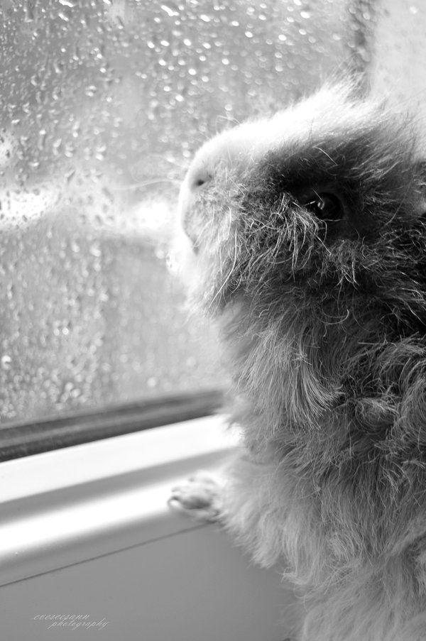 Ik zit me achter het vensterglas onnoemelijk te vervelen. Ik wou dat ik twee cavia's was dan kon ik samen spelen. (Vrij naar M. v/d Plas)