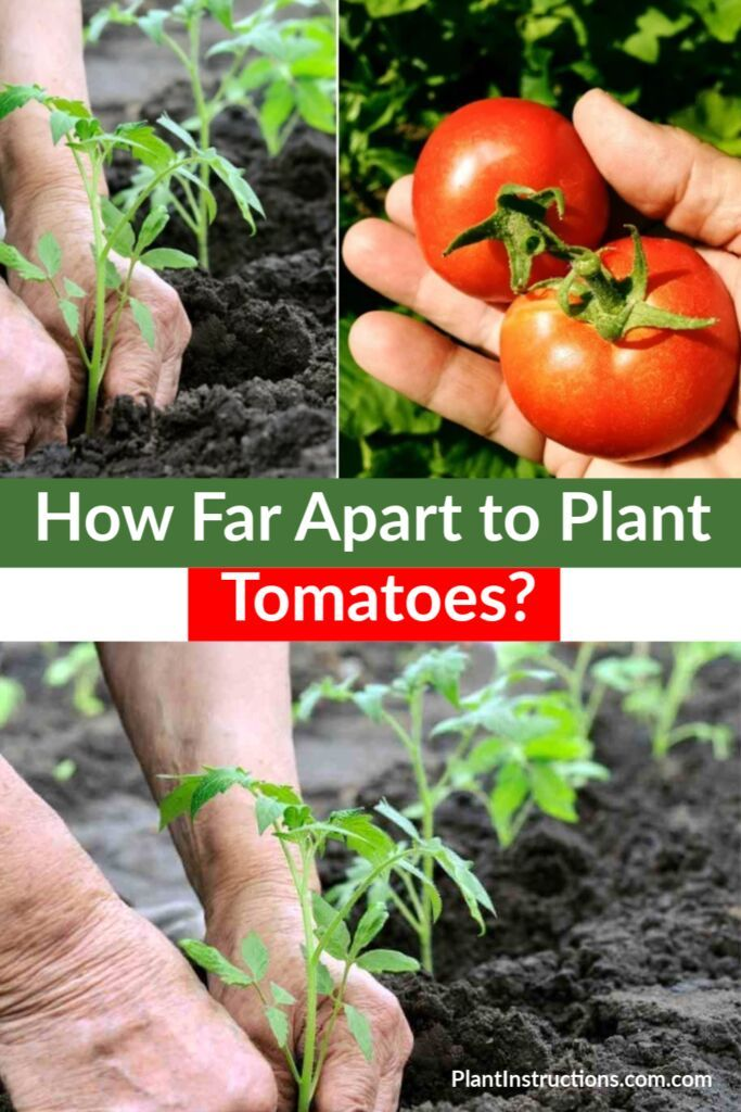 How Far Apart To Plant Tomatoes In 2020 Tomato Plants Tomato Garden Vertical Vegetable Gardens