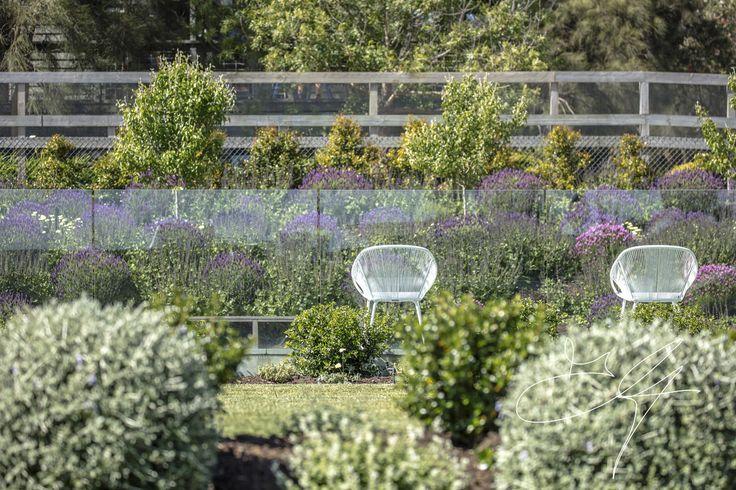 Poolside in one of our Coastal Gardens - Eugene Gilligan Garden Design
