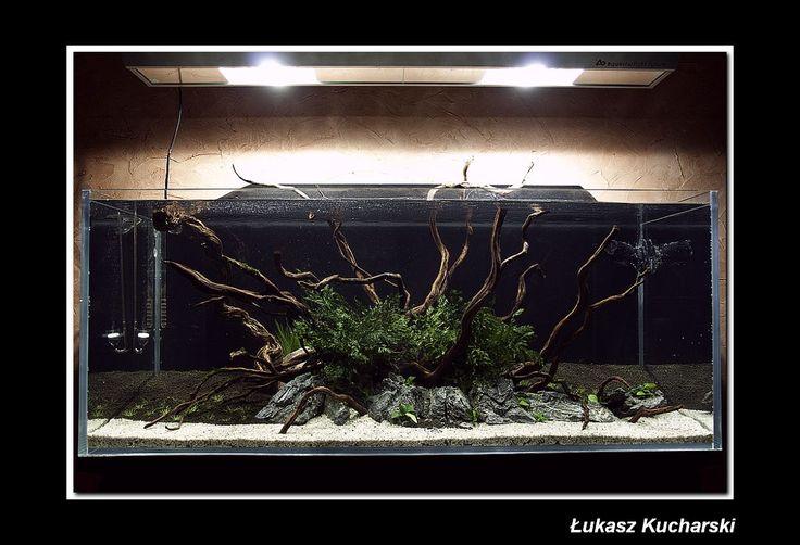 Dzielmy się Pasją: Akwarium Łukasza Kucharskiego