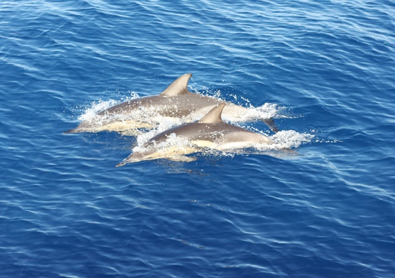 dolphins at Marine park, Alonissos by Like flowers and butterflies, via Flickr