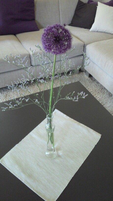 Allium dekorieren