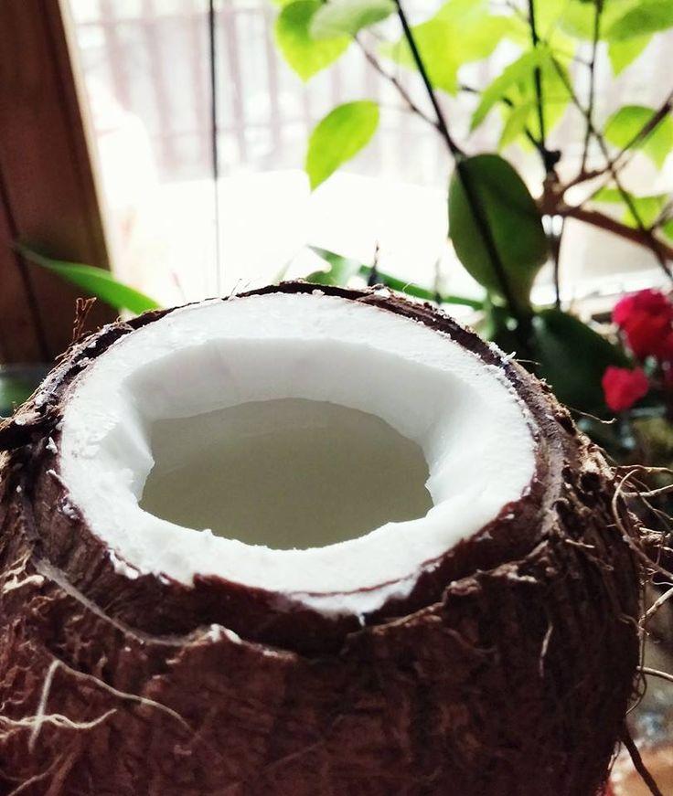 Hogyan nyissunk ki egy kókuszdiót, igyuk ki a levét és együk meg egy darab kenőkés segítségével