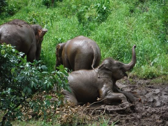 Book your tickets online for Baanchang Elephant Park - Private Day Tours, Chiang Mai: See 1,382 reviews, articles, and 623 photos of Baanchang Elephant Park - Private Day Tours, ranked No.5 on TripAdvisor among 116 attractions in Chiang Mai.