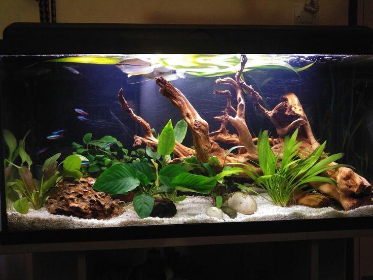Aquarium 100 litres aquascape racine et pierre