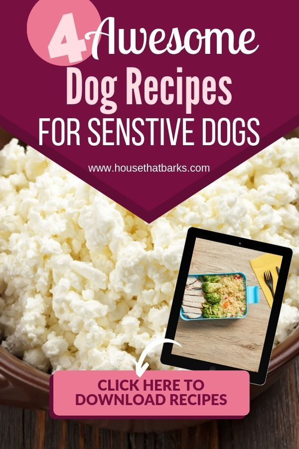 Upset Tummy And Diarrhea Recipe Dog Food Recipes Dog Recipes