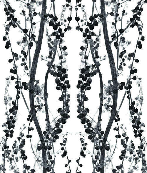 Black White Branches BR088 Wallpaper - Self Adhesive Wallpaper - InteriorPlace.com