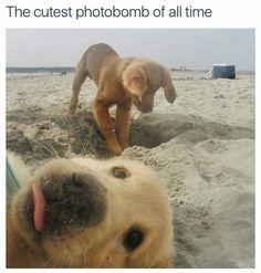 Puppy Photobomb!