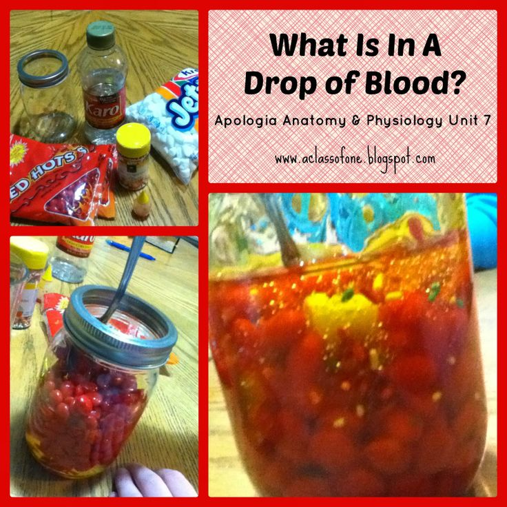 Build a model drop of blood! An interesting and fun supplement to Apologia's anatomy & physiology course! @apologiaworld #blood #anatomy
