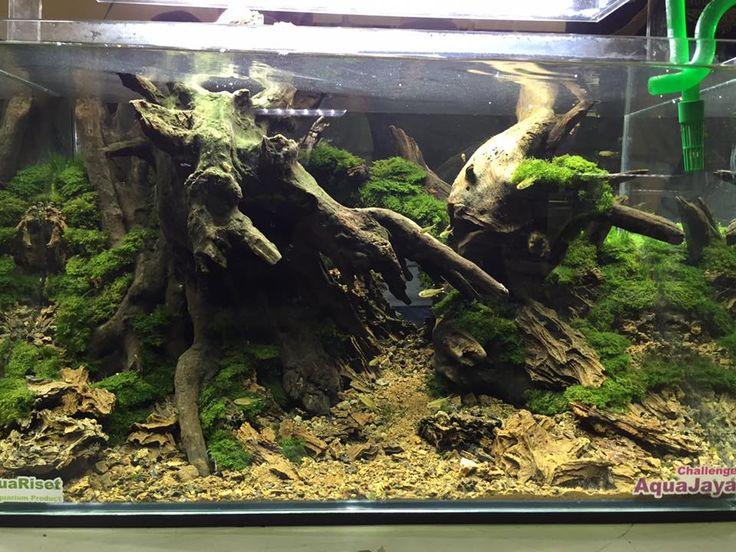 61 Best Reptile Terrarium Images On Pinterest Reptile Enclosure - Terrarium Tanks DesignerStyle