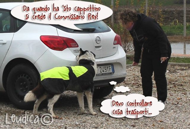 """""""I'd better check the trunk"""" - """"Since he's been wearing that coat, he thinks he's the police dog Commissioner Rex!"""""""