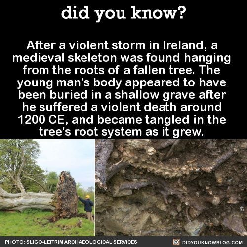 Medieval skeleton found hanging from roots of tree after a violent storm.