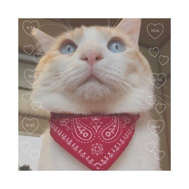 . . 💗🐱💗 . #愛猫 #ねこ #猫 #ねこすたぐらむ  #にゃんすたぐらむ #白茶mix #猫暮らし . #singlemother #シングルマザー #mama #ママ #まま #男の子 #息子 #子供 #kids #キッズ #親子 #親ばか部 #love #hughug ❤︎ ❤︎ ❤︎