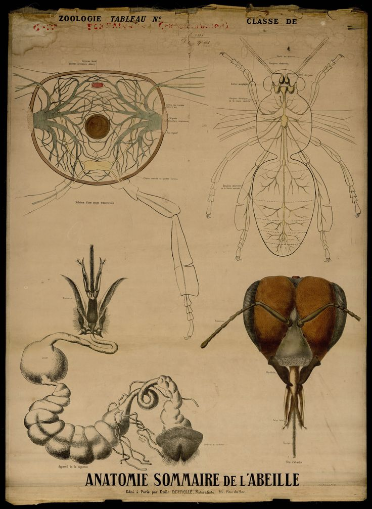 les 88 meilleures images du tableau anatomie sur pinterest anatomie humaine planche. Black Bedroom Furniture Sets. Home Design Ideas