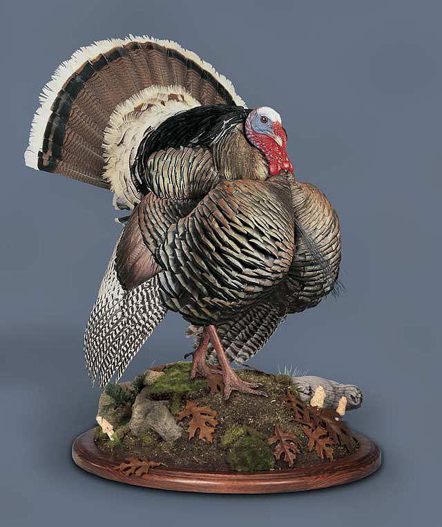 Wild Turkey Mount Displays
