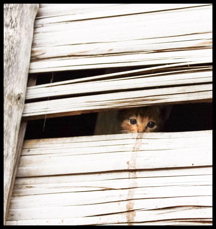 Peeping cat...