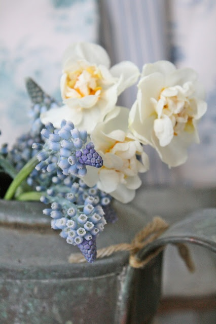 gorgeous and delicate spring flowers - Muscari and narcissus