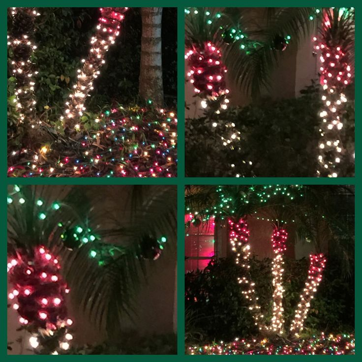 67 Best Palm Tree Christmas Images On Pinterest