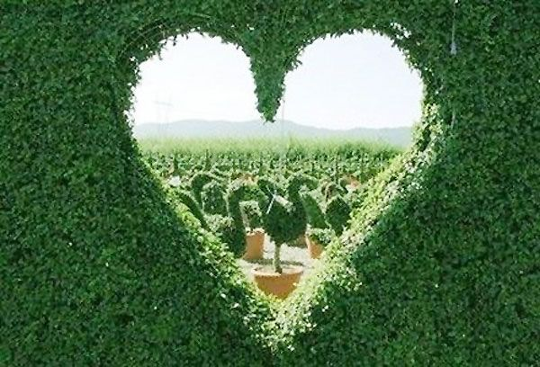 heart shaped hole in hedge