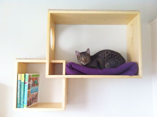 DIY modern cat shelves. Awesome way to decorate and make your cat happy!