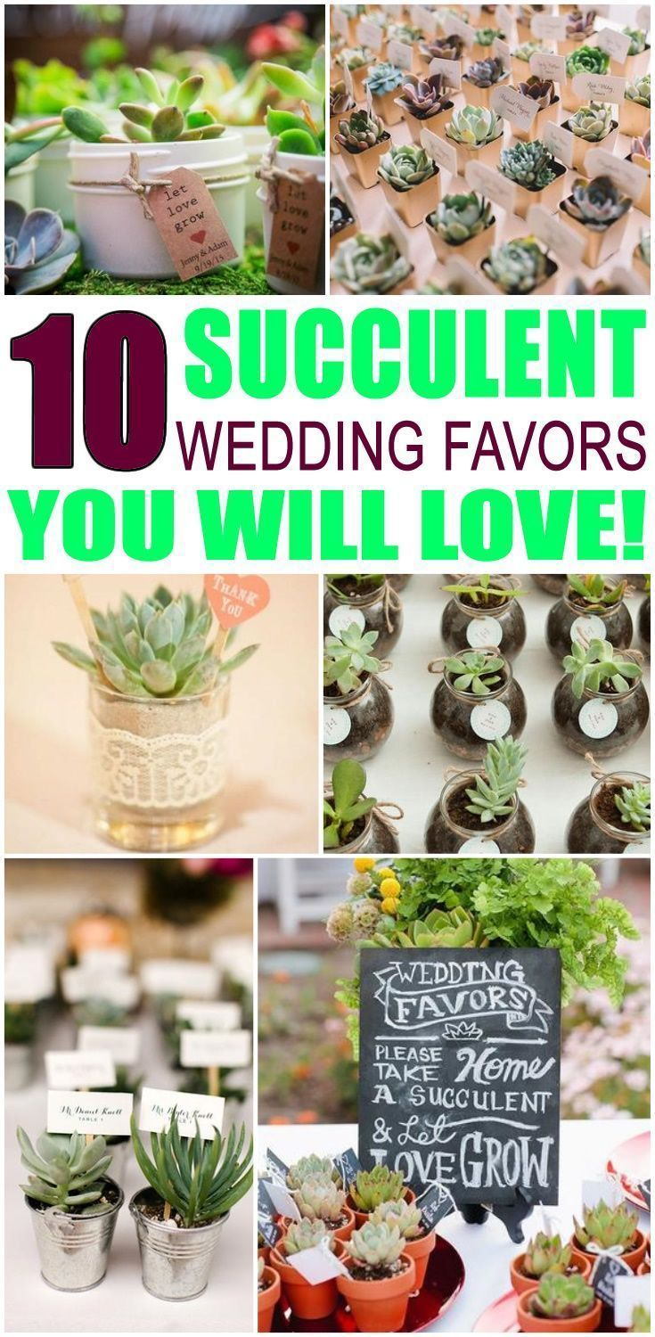 Wedding Favors! Succulent wedding favor ideas that your guests will love! Find ideas from DIY, cheap, creative, unique, inexpensive, elegant, classy, useful and more. Pick a wedding shower favor idea for guests that they will be happy to take home. Find the best Succulent wedding favor ideas now! #weddingfavors