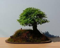 bonsai tree - Google Search