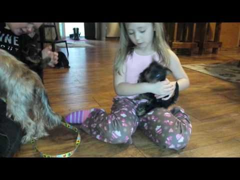 Kickstart your day with a good video! ⚡️4 wk old Yorkie Foster puppies  https://youtube.com/watch?v=lebiogZQOx0