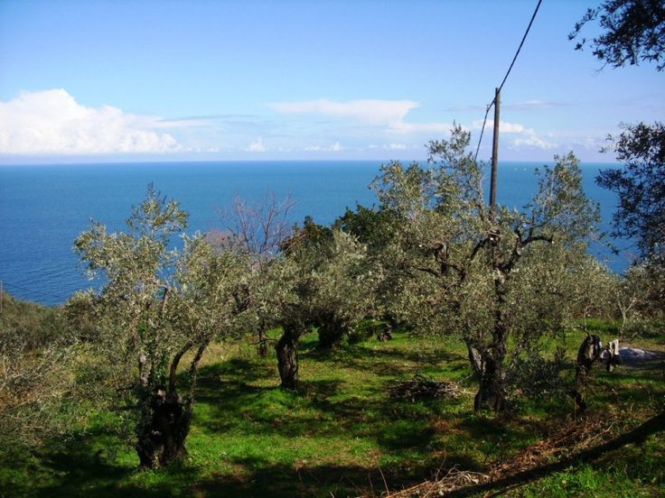 Agios Loannis, Magnesia, Eastern Pelion, Mousesi-Zagora, Greece Lots/Land  For Sale - Land at Eastern Pelion close to sea - IREL is the World Wide Leader in Greece Real Estate
