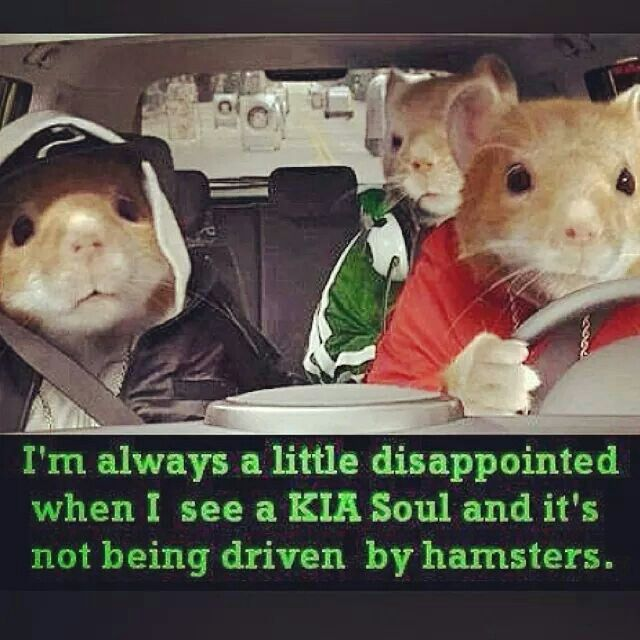 edbef9f87e44f410e1313ea7158925ae kia soul commercial 201 best kia soul images on pinterest kia soul, hamsters and
