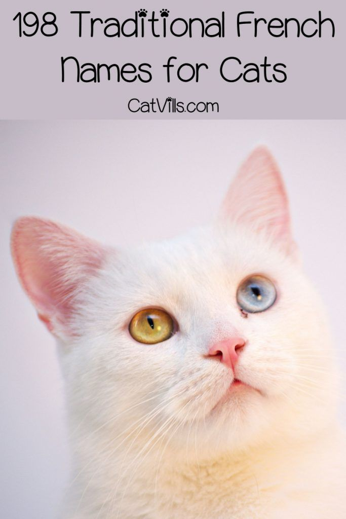 309 Fantastique French Cat Names Catvills French Cats Cat Names Cats