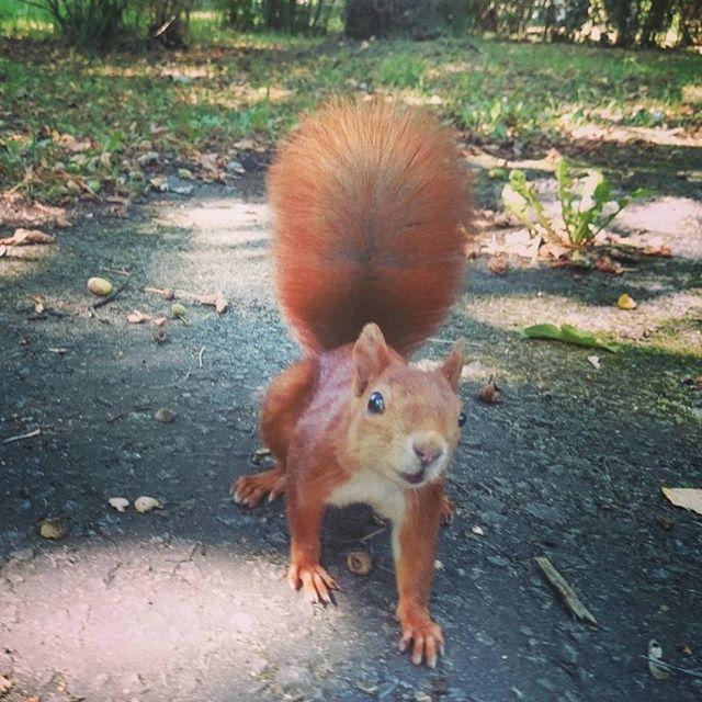 Dobrze jest mieć przy sobie zawsze aparat - np: Xperia - najlepszy aparat foto z funkcją dzwonienia :) #wiewiórka #wiewiorka #wiewióra #squirrel #orava #ardilla #scoiattolo #vevericka #eichhörnchen #eekhoorn #orav #ecureuil #ikorna #sincap #vavere #mokus #egern #veverka #ekoree #ekorn #xperia