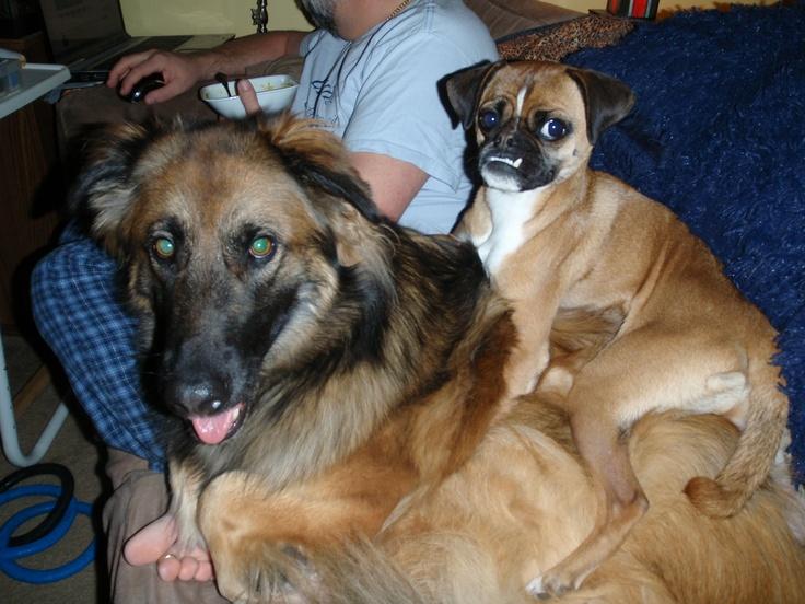 Dexter & Oscar