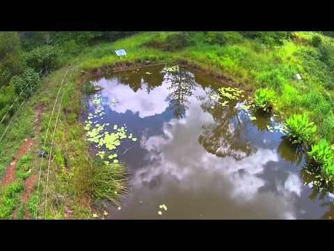 ▶ The Perfect Permaculture Fish Pond - with Geoff Lawton - YouTube