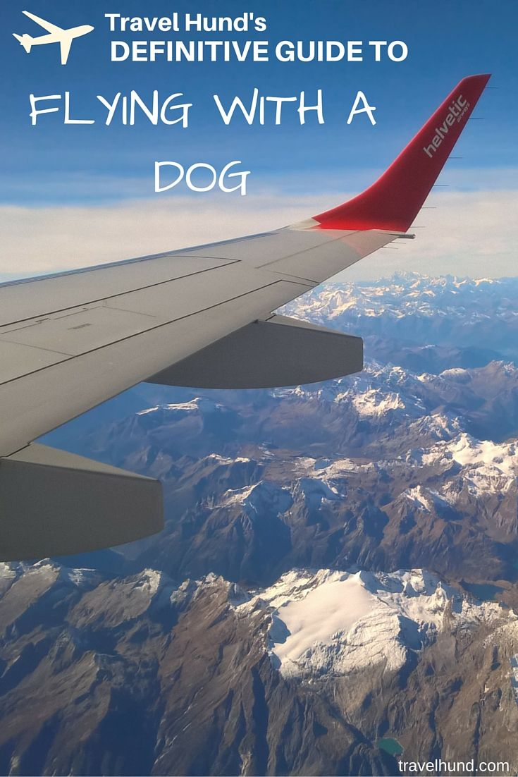 First time flying with a dog? Check out this definitive guide to flying with an in-cabin dog!