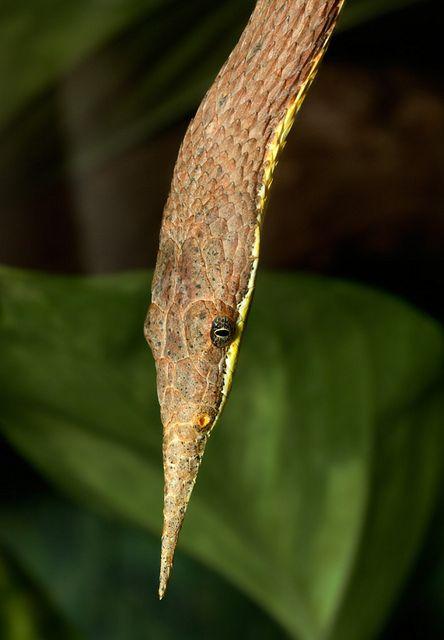 120 Besten Snakes And Reptiles Bilder Auf Pinterest