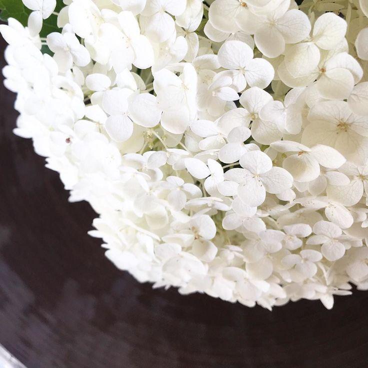 Ladre di fiori  non abbiamo saputo resistere #flowers #flowersthief #ladredifiori #ortensie