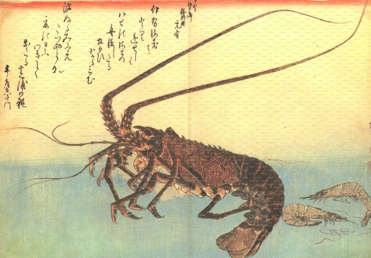 """Book Plate from Hiroshige's """"A Shoal of Fishes"""" - Ise-yebi and Shiba-yebi (Two Shrimp and a Lobster). Ando Hiroshige. 1980 by DustCoverPaperati on Etsy"""
