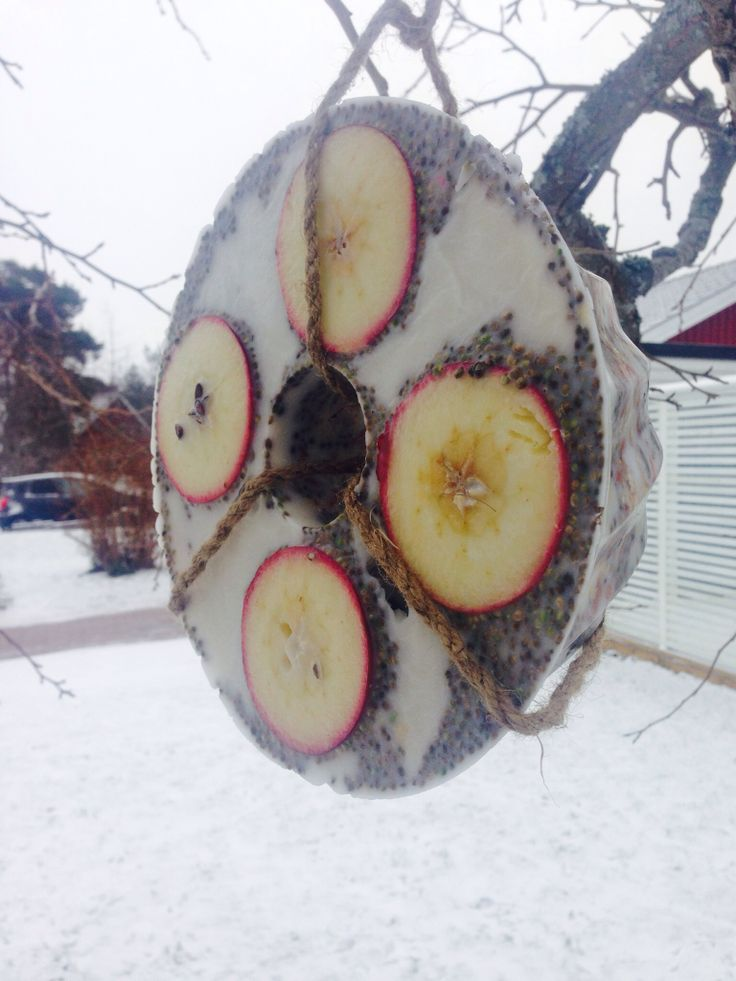 Krans med fågelmat. Cocosfett, fågelfrön, jordnötter, russin, äpplen