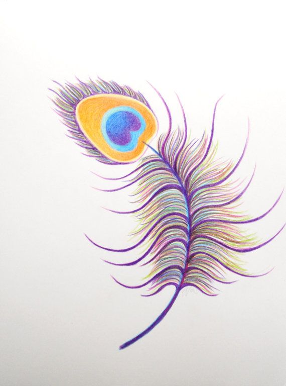 Peacock Swirl - Original Color Pencil Drawing - 9 by 12