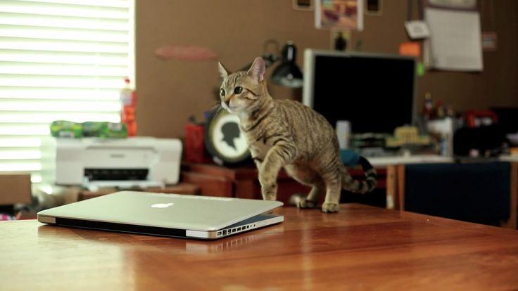 Jedi Kitten uses Mac